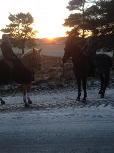 jul häst